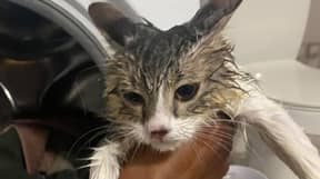 Owner Shares Snap Of Soaking Cat After It Takes A Spin In The Washing Machine