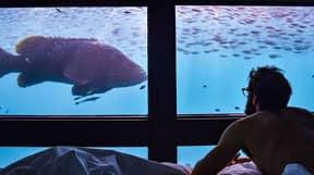 Underwater Hotel Room At Reefsuites Has Views Of The Great Barrier Reef