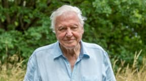 A Perfect Planet: Viewers Left Heartbroken After David Attenborough's Urgent Plea To Save The Planet