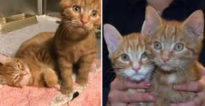 Two Adorable Kittens Rescued From A Recycling Bin Just Before Christmas