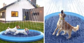 You Can Now Buy A Paddling Pool With Sprinklers For Your Dog