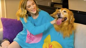 Sweaters You Can Wear With Your Dog Have Arrived For Valentine's Day