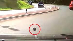 RSPCA Trying To Track Down Motorist Who Threw A Kitten From A Moving Car