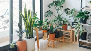 House Plants Help Relieve Stress Of Lockdown, Scientists Confirm