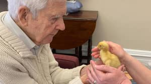 Chicks And Ducklings Hatched In Care Homes To Boost Residents' Wellbeing