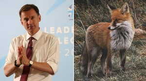 Jeremy Hunt Wants To Bring Back Fox Hunting If He Becomes Prime Minister
