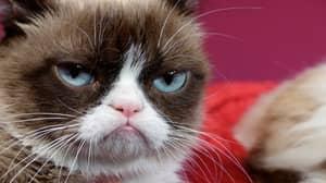 Viral Sensation Grumpy Cat Dies, Aged Seven