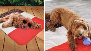 B&M Is Selling Cooling Mats For Dogs