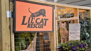 Couple Create Incredible Outdoor Area For Their Cats