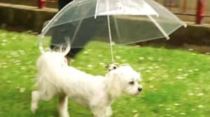 This Dog Umbrella Is The Stuff Of Dog Owner Dreams