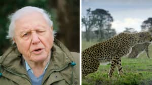 David Attenborough's Breaking Boundaries: The Science of Our Planet Just Dropped On Netflix