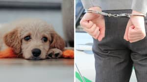 Parliament Officially Passes Animal Welfare Bill Calling For Tougher Sentencing After Finn's Law Campaign
