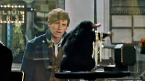 Fantastic Beasts Exhibition Opens At London's Natural History Museum