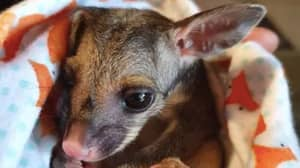People All Around The World Are Sewing Pouches For Australian Animals