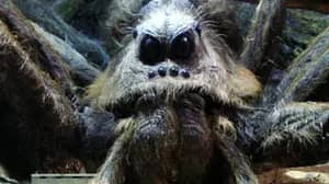 Man Finds Terrifying Spider In His Garden That Looks Just Like Aragog From Harry Potter