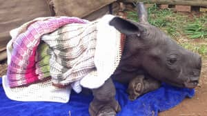 Company Creates Colourful Blankets For Orphaned Rhinos