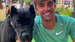 Love Island's Jack Fincham Hit With Backlash After Buying Dog With Cropped Ears