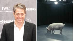 Hugh Grant Says He Almost Played The Pig Sex Prime Minister In Black Mirror