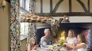 'Giraffe Hall' Hotel Where You Can Dine With The Animals To Open In The UK