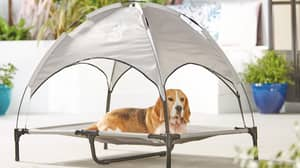 Aldi Is Selling Tiny 'Sunshade' Loungers For Dogs