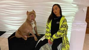 BBC Upsets Campaigners Over Scenes Of Little Mix's Leigh-Anne Pinnock's Dog With Cropped Ears