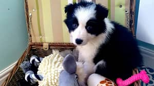 Woman Warns Against Buying A Lockdown Pet After Puppy Dies Aged Just 10 Weeks