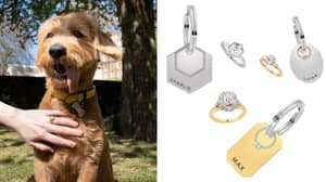 You Can Now Buy A Dog Collar To Match Your Engagement Ring