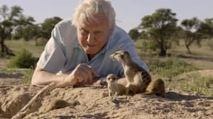 Watching A Lot Of David Attenborough Helps With Anxiety and Stress