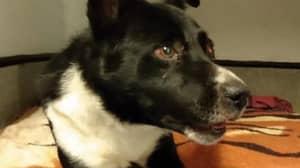 Dog Left For Dead Under 'Pile Of Rocks' In Scotland