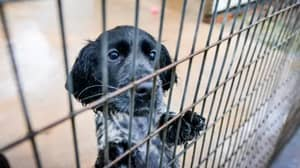 Dog Trust Calls For 'Urgent Action' As It Saves 1,500th Smuggled Puppy