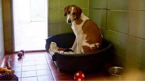 Britain's Loneliest Dog Has Spent 450 Days In Kennels