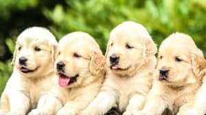 Most Popular Dog Names Of 2019 Influenced By 'Love Island' And The Royals