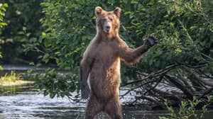 Comedy Wildlife Photography Award Finalists For 2020 Have Been Announced - And They Are Hilarious
