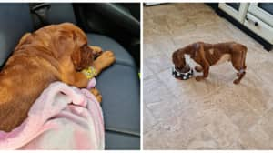 Newborn Puppy With Kennel Club Papers Dies From Organ Failure