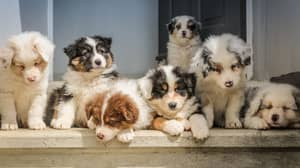 BBC Changes Title For Dog Breeding Documentary Following Backlash And Online Petitions