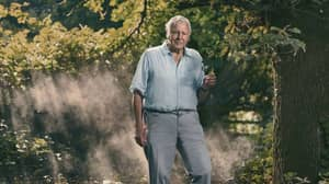 Sir David Attenborough To Return New Dynasties Series In 2022