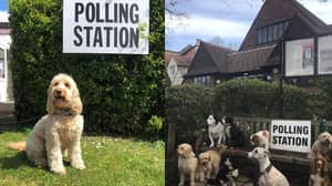 Dogs At Polling Stations Are Back And Here Are The Best Pictures