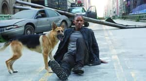 Abbey, The Dog From I Am Legend, Is Now 13 And Enjoying Her Retirement