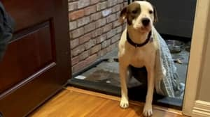 Rescue Dog Struggles To Enter His New Home Because He Had Never Been Indoors Before