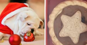 Sainsbury's Launches Mince Pies For Dogs In Time For Christmas
