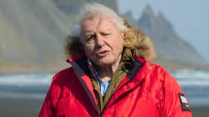 New Trailer Drops For David Attenborough's Jaw-Dropping New Show 'Seven Worlds, One Planet'