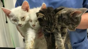 Four Kittens Were Dumped At Side Of Country Lane In 35C Heat