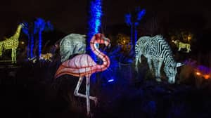 Chester Zoo Is Launching A Magical Animal Lantern Event For Christmas