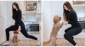 You Can Now Do A Workout With Your Pooch