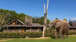 West Midlands Safari Park: UK Safari Lodges Where You Can Watch Elephants From Your Room Open For Bookings