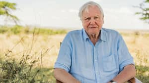 Sir David Attenborough Quits Instagram Two Months After He Joined