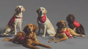 Specialist Bio-Detection Dogs Can Sniff Out Covid, Study Shows