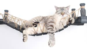 This Cat Bridge Is Only For The Boujiest Of Felines