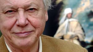 First Trailer Drops For New Film All About Legend That Is David Attenborough