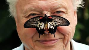 David Attenborough Is Working On Groundbreaking Documentary Exploring How Animals Use Colour